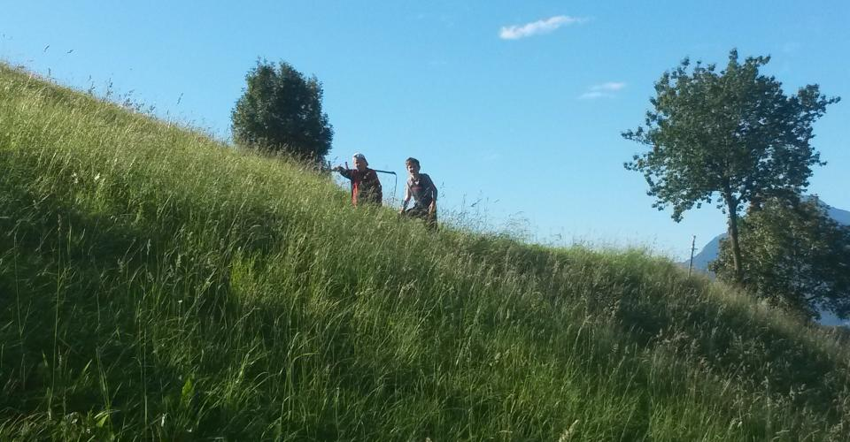 Haymaking at the Obereggerhof